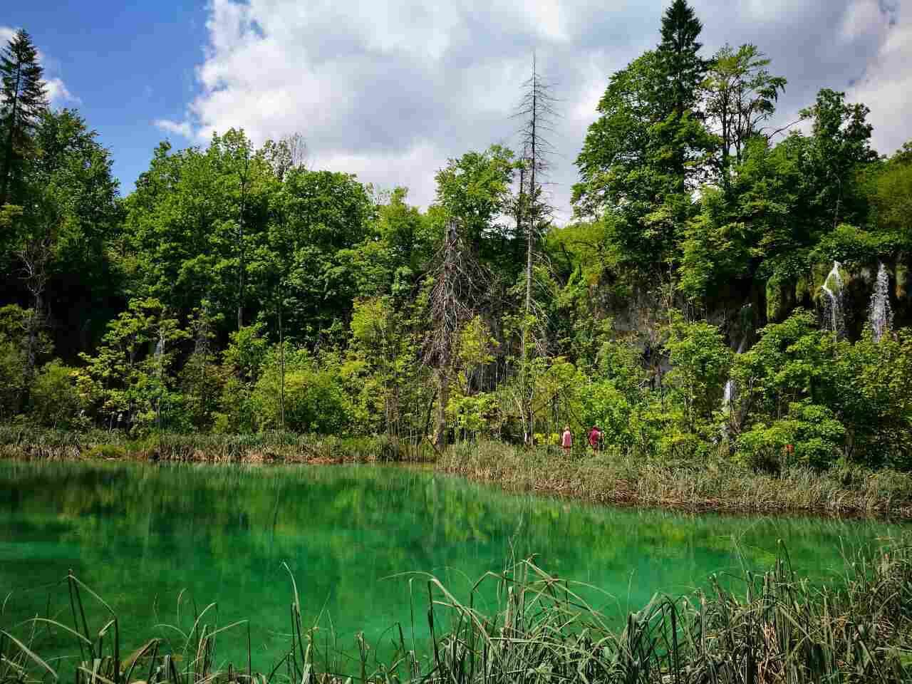Green trees reflecting in a lake at Plitvice Lakes in Croatia