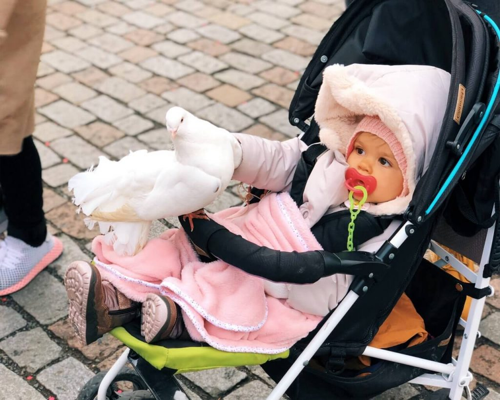 Baby girl plays with a trained dove in Prague