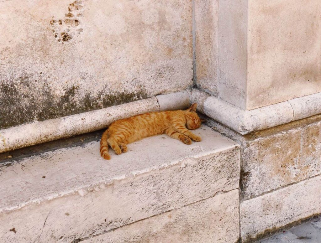 Cat sleeping at the Mediterranean coast in Croatia