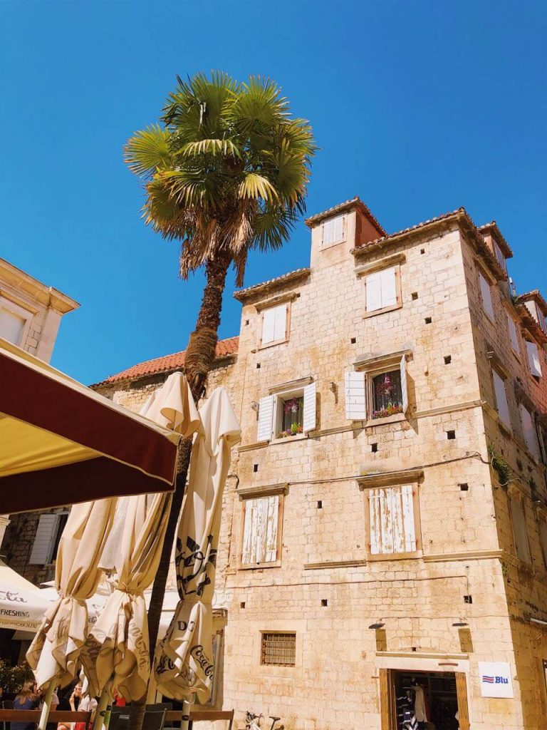 Palm tree and building in Trogir