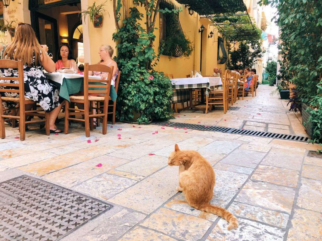 Cat in the center of Corfu Town