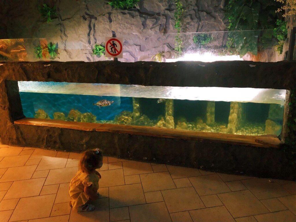 Child exploring the swimming turtles