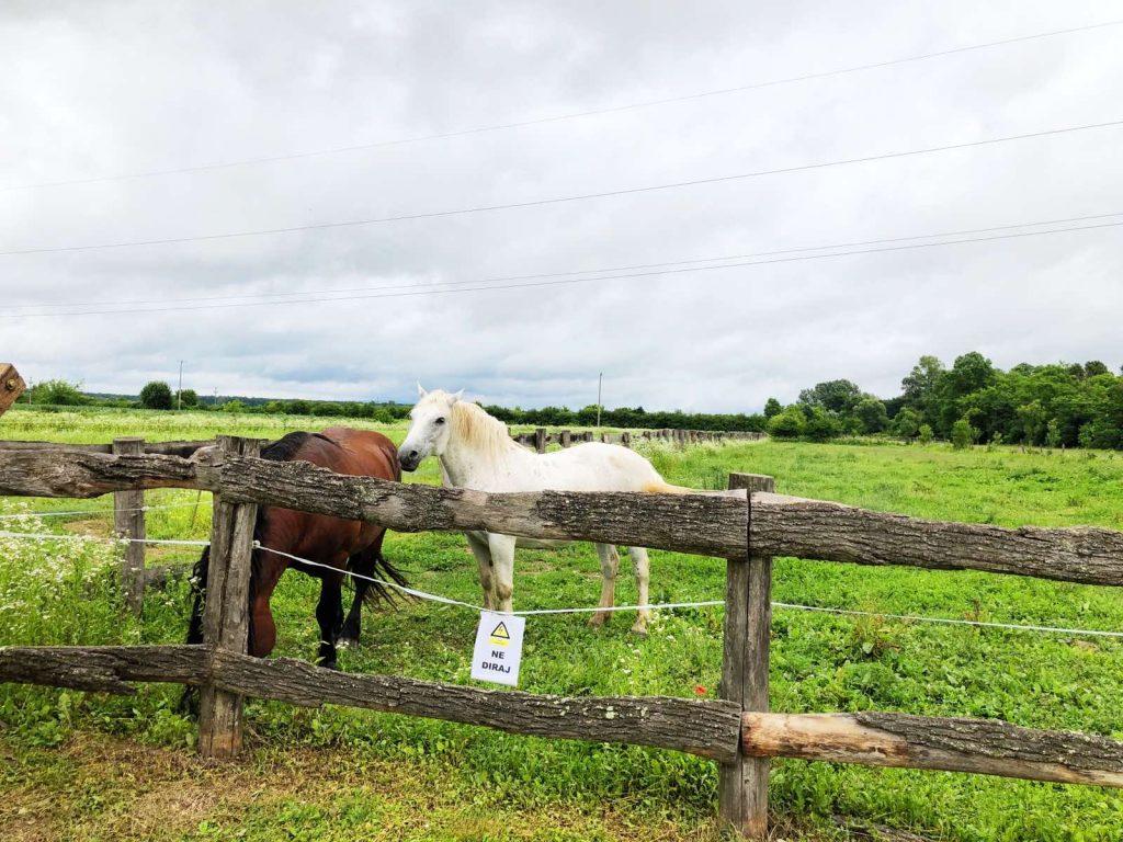 Horses in Lonja field