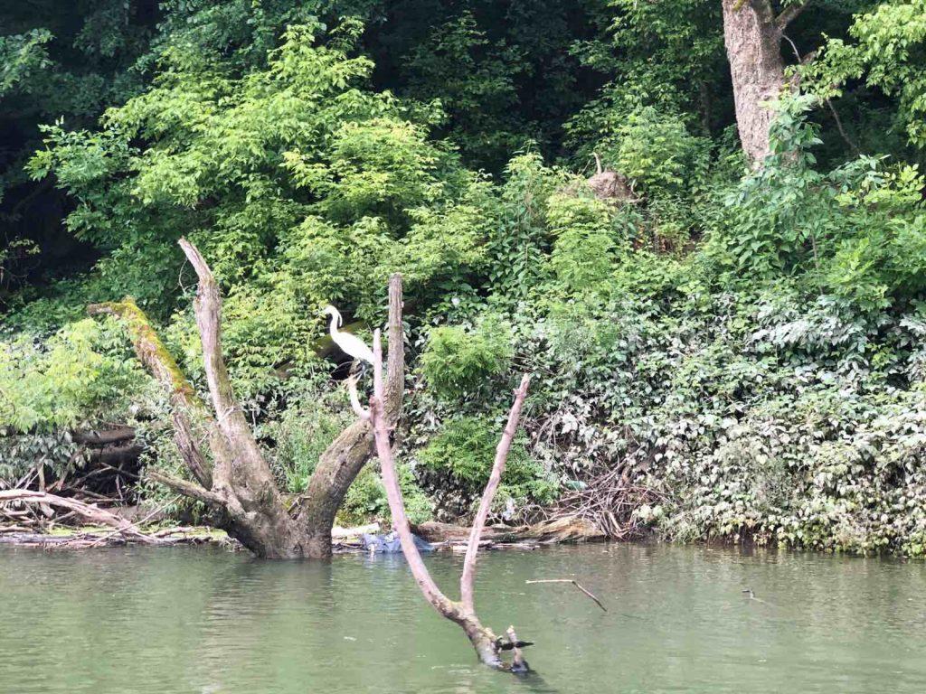 Sava River, Lonja field
